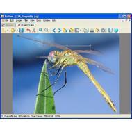 Скриншот XnView 2.49.1